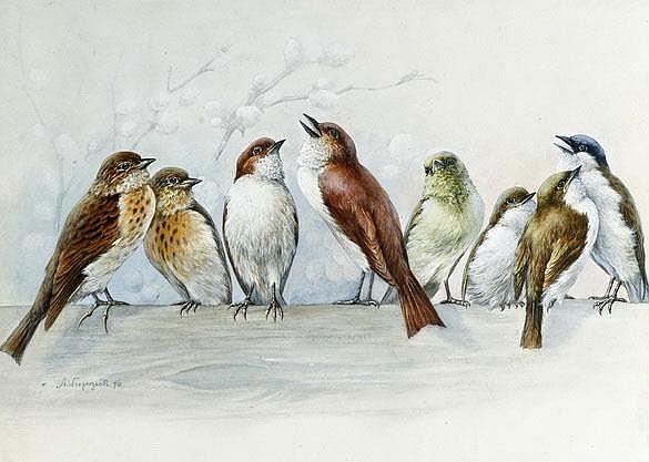 Weczerzick Alfred (1864-1952), eight birds on a