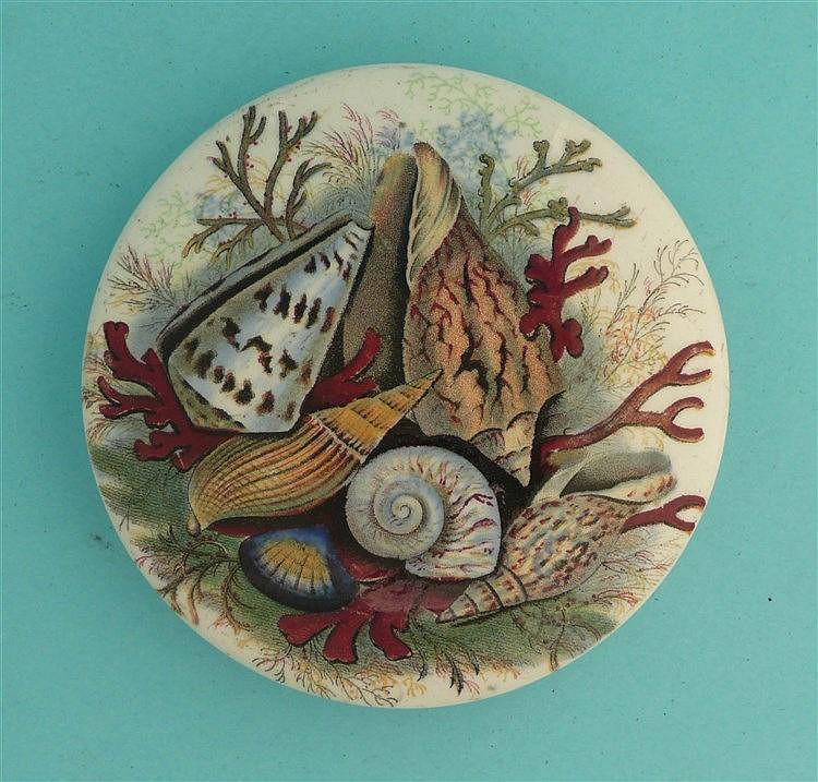 Shells (52B) large    pot lid, pot lids, potlid, potlids, prattware