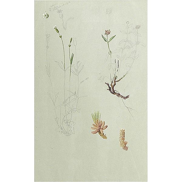 Albert Valentien, botanical study, Rookwood artist