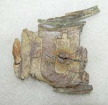 US Oval Belt Plate Back Intack by Solder, Recovered by George from Wilderness Area, Where the woods burned