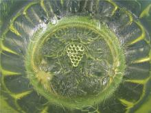 "Lot 77: Opalescent vaseline glass good luck and grape bowl, 9"" Dia x 3 1/2""H, EC"