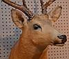 Deer Trophy Mount, 31in. x 19in.