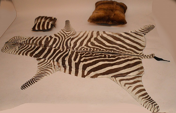 Zebra rug and pillow along with buffalo pillow