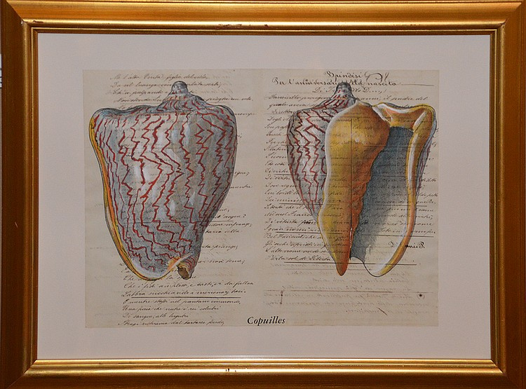 Italian School 18th-19th century hand written document with hand colored shells, ink and watercolor, image size 12 ¼ x 16 ¾