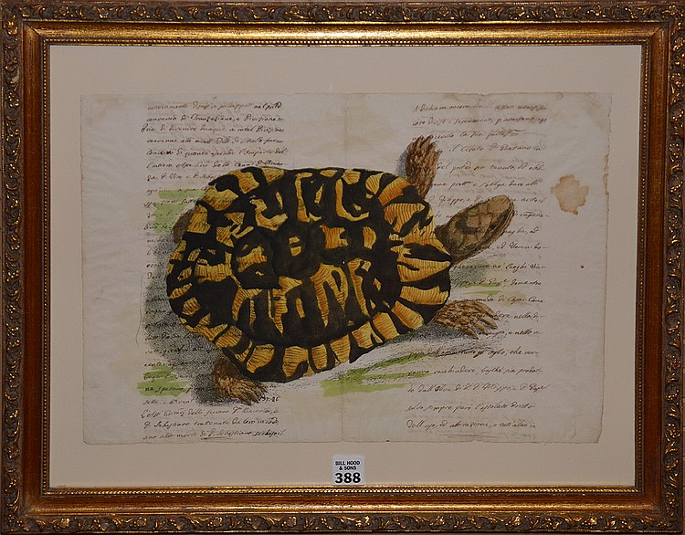 Italian School 18th-19th century hand written document with hand colored turtle, ink and watercolor, image size 12 ¼ x 16 ¾