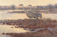 James Morgan, Early Spring - Sandhill Cranes