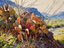 Mark Haworth, Rio Bravo Kaleidoscope