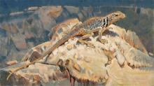 James Morgan, The Critic - Collared Lizard