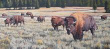 Lindsay Scott, Yellowstone Sageland