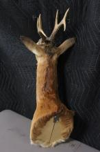 Lot 135: Taxidermy of mountain goat, shoulder mount