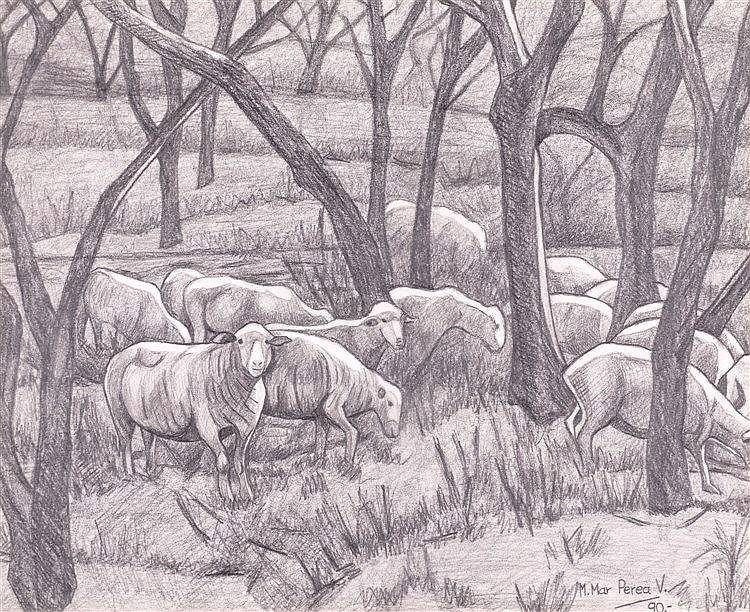 MARÍA DEL MAR PEREA VILLALÓN - sheep