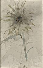 DOROTEA VON ELBE - Flower