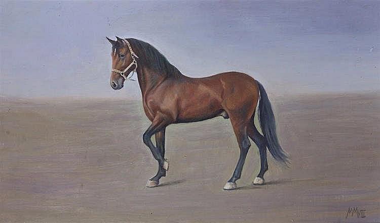 MÁXIMO MORENO - HORSE