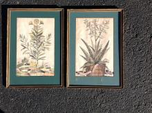 2 17TH C.(?) BOTANICAL PRINTS BY ABRAHAM MUNTING, INFORMATION ON BACK AS PICTURED, IN MATCHING FRAMES AND MATTES, PRINTS MEASURE 12 1/4