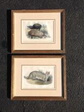 2 SMITH CIRCA 1870'S-1880'S ENGRAVINGS OF BOBCAT AND ANTEATERS, FRAMES MEASURE 11 1/4