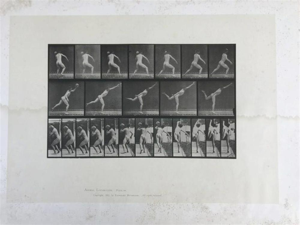 "EADWEARD MUYBRIDGE ANIMAL LOCOMOTION PLATE 316, COPYRIGHT 1887, SHEET SIZE MEASURES 19"" X 24"", HAVE SOME FOXING AND WATER STAINS, AS PICTURED"