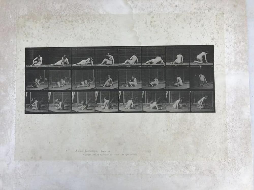 "EADWEARD MUYBRIDGE ANIMAL LOCOMOTION PLATE 266, COPYRIGHT 1887, SHEET SIZE MEASURES 19"" X 24"", HAVE SOME FOXING AND WATER STAINS, AS PICTURED"