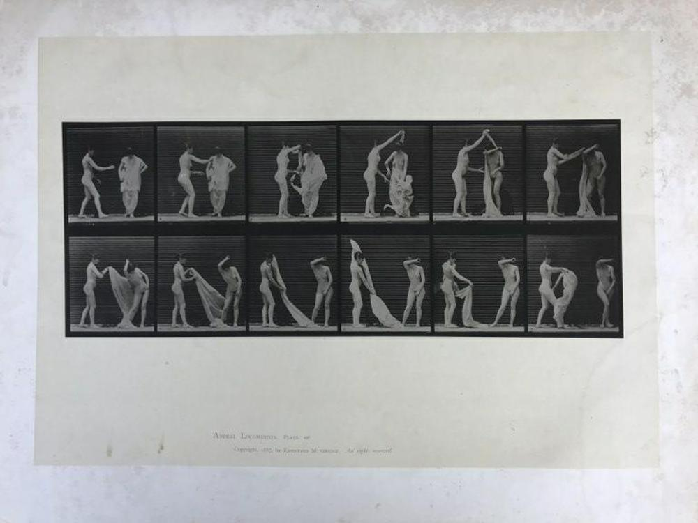 "EADWEARD MUYBRIDGE ANIMAL LOCOMOTION PLATE 427, COPYRIGHT 1887, SHEET SIZE MEASURES 19"" X 24"", HAVE SOME FOXING AND WATER STAINS, AS PICTURED"