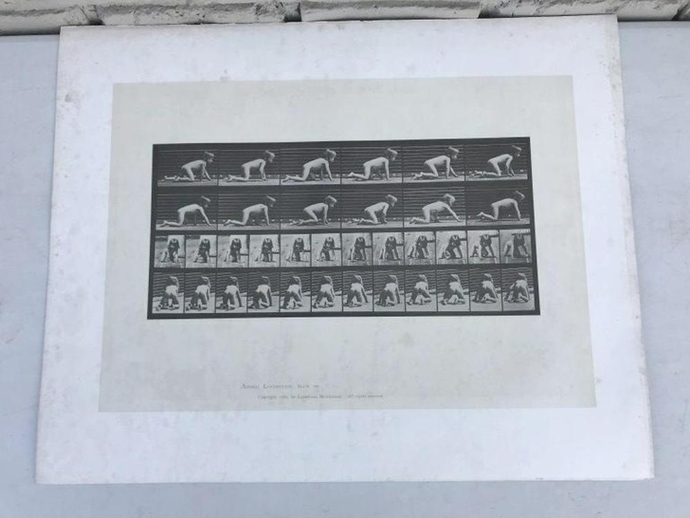 "EADWEARD MUYBRIDGE ANIMAL LOCOMOTION PLATE 471, COPYRIGHT 1887, SHEET SIZE MEASURES 19"" X 24"", HAVE SOME FOXING AND WATER STAINS, AS PICTURED"