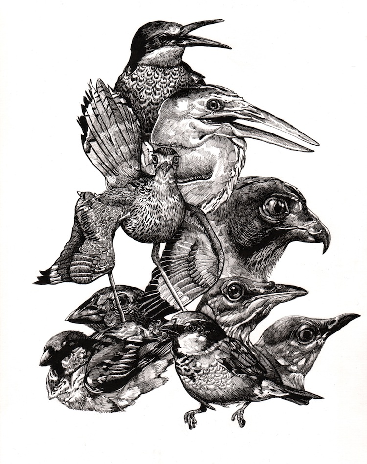 Endangered Birds - Original Drawing by Juan Travieso