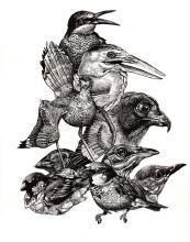 Endangered Birds - Original Drawing by Juan Travieso