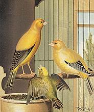 Blakston, W. A., W. Swaysland u. August F. Wiener The Illustrated Book of Canaries and Cage-Birds, British and Foreign. 2 Bde. Mit 56 chromolithogr. Tafeln und 92 Textholzstichen. London, Cassell, (1877-1880). VIII, 284 S., 1 w. Bl., S. 285-448, 1 w.