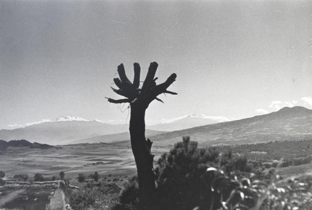 Armando Salas Portugal (1916-1995)