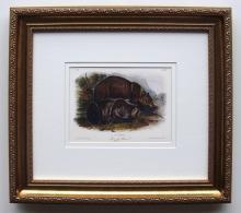 Audubon Quadruped Grizzly Bear Giclee Framed