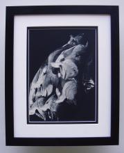 Therese Le Prat Fish photogravure framed