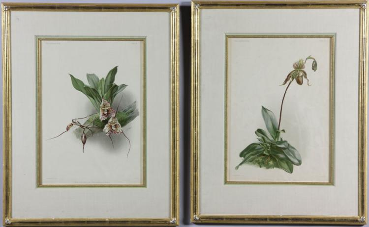 Moon, Pr. Botanical Prints