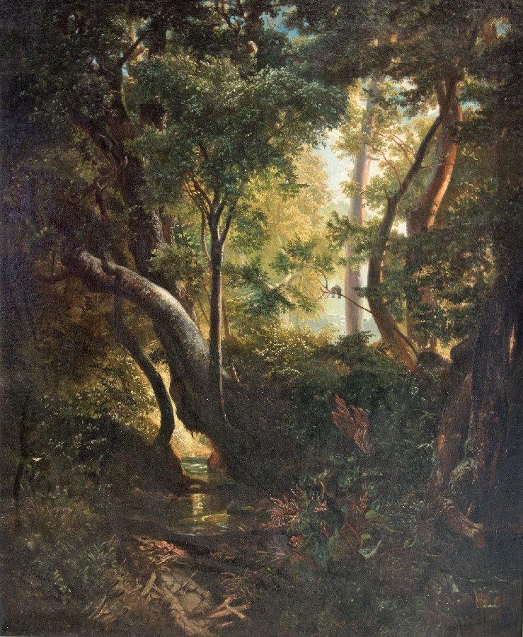 Romantische Waldlichtung