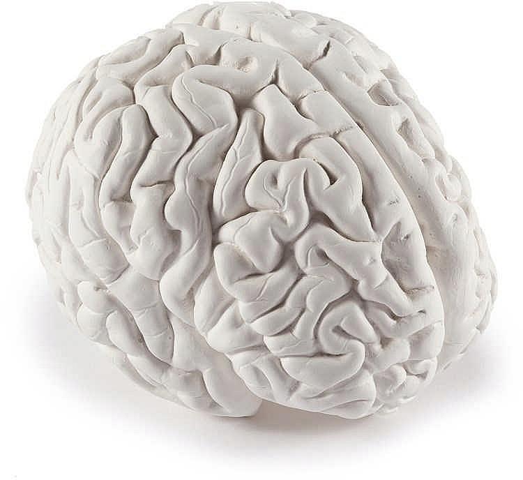 Katharina Fritsch – Gehirn