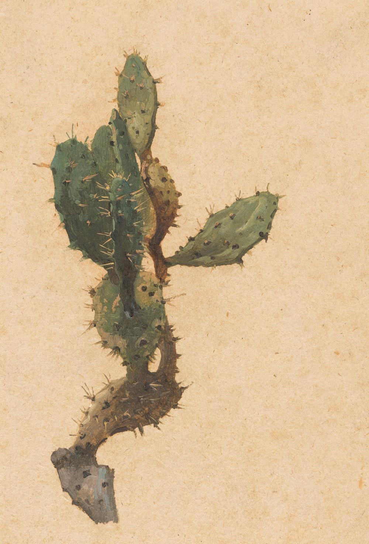 Deutsch – Kaktus (Opuntia tuna)