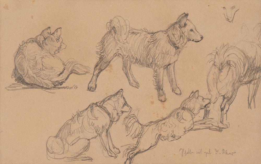 Christian Friedrich Gille – 2 Bll.: Studien zu Spitzhunden
