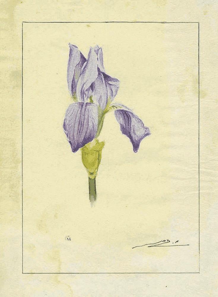 Meir Gur-Aryeh - Iris