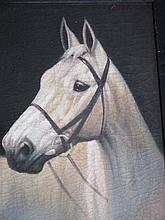 Framed oil painting equine study of a white horse