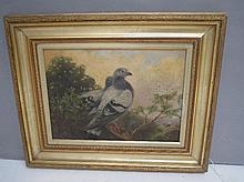S.J.B KEARY (C19th English School), pair pigeons