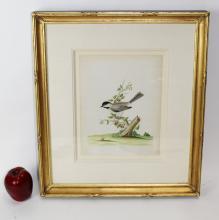 John Abbot Chickadee watercolor on paper