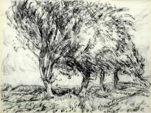 W. Durac Barnett (British, 1876-1961). Tree study, charcoal, signed, glazed