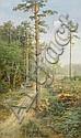 MÜHLIG, BERNHARD(Eibenstock 1829 - 1910