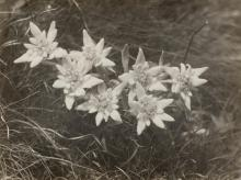 GRASS, RUDOLF (1906-1982).