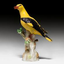 GOLDEN ORIOLE,