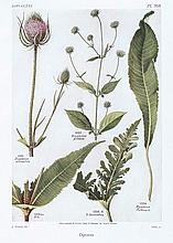 BOTANIK - Bonnier, G. u. R. Douin. Flore complète