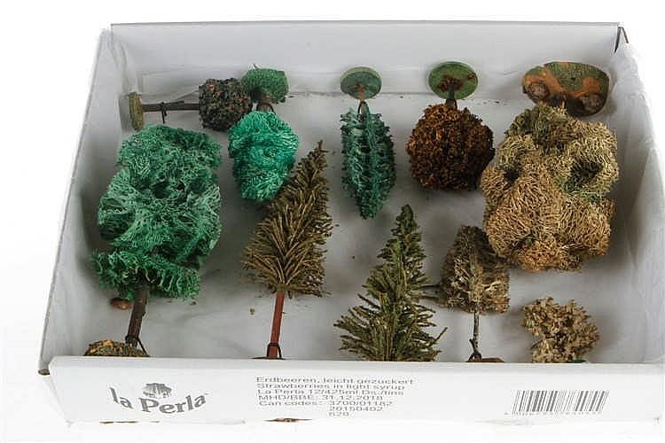 10 versch. Luffabäume