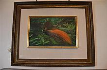 Paul Jones - Bird of Paradise Raggiana 28 x 44 cm