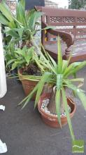 3 Potted Plants