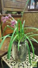 Small Orchid In Hollow Log