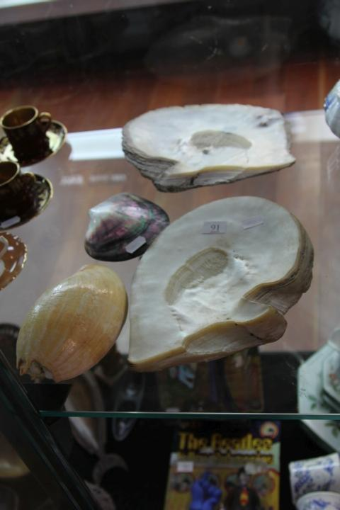 Two Large Mother of Pearl Shells with Two Shell Examples