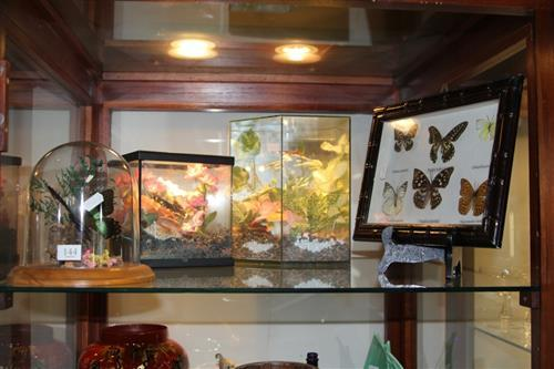 Butterfly Specimens in Case with Others