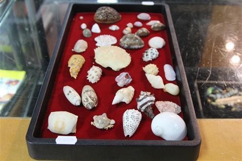 Various Sea Shells